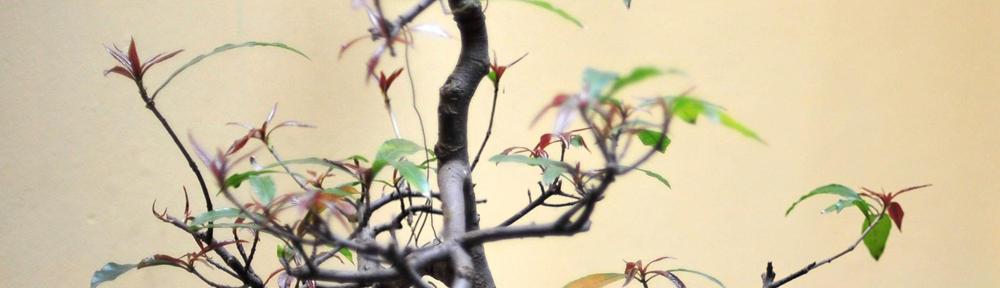 Toko Almishbah Yogyakarta | 085725881971 | 081328161823| Yogyakarta