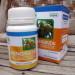 Mengkudu – Herbal Indo Utama