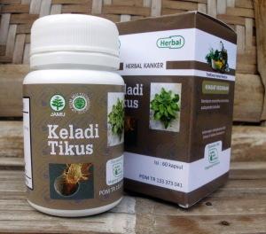 keladi tikus - kotak- herbal indo utama - toko almishbah3