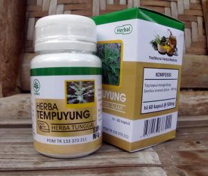 tempuyung - kotak- herbal indo utama - toko almishbah